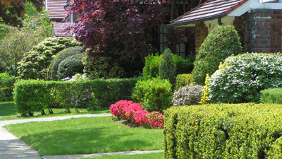 Planting the rights plants in your garden - garden design