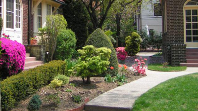 Look for assymetry when planting shrubs